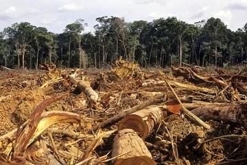 ONU señala que delitos medioambientales cuestan hasta $us 258.000 millones al año