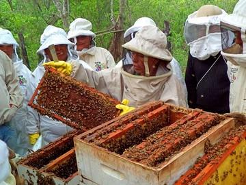 Pequeños productores son el motor del desarrollo apícola en Chuquisaca