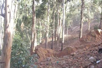 No identifican a autores de tala forestal en el D-5