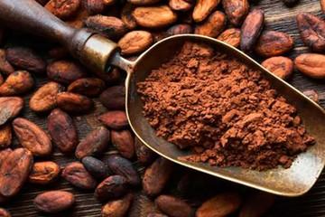 Gobierno potenciará producción de cacao con Bs 260 millones