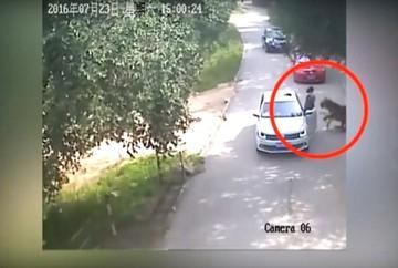 Así fue el ataque de un tigre a una mujer en safari de Pekín