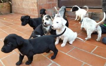 """El """"Petardo"""" sucrense ofrece en adopción a sus nueve cachorros"""