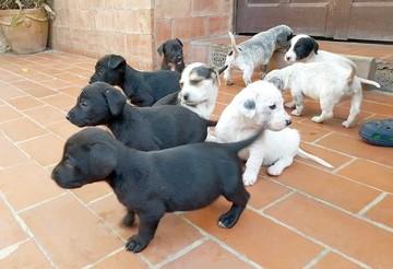 Adoptan a todos los cachorros de Tubín