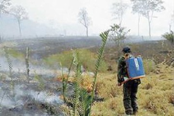 Brigadas recorren el país para sofocar incendios
