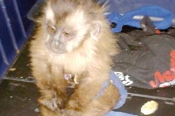 Rescate de animales silvestres se dilata por falta de albergue