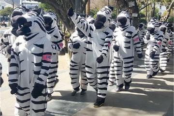 Cebras se retiran por falta de respaldo de la Alcaldía