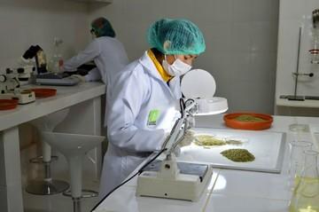 Orégano boliviano logra la certificación orgánica