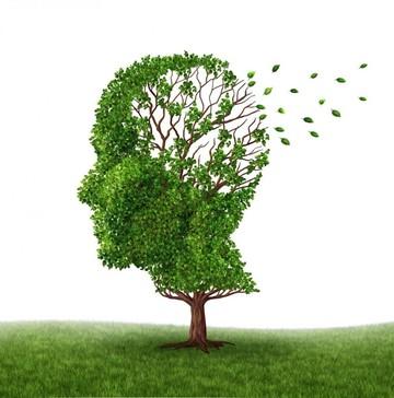 Científicos españoles detienen el alzhéimer en ratones