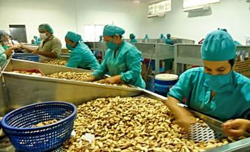 Castaña boliviana, para mal de Alzheimer