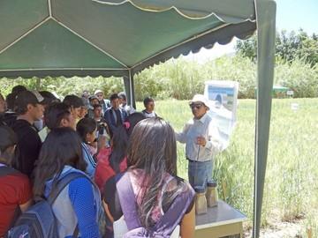 Proinpa logra dos cosechas de trigo al año en Río Chico