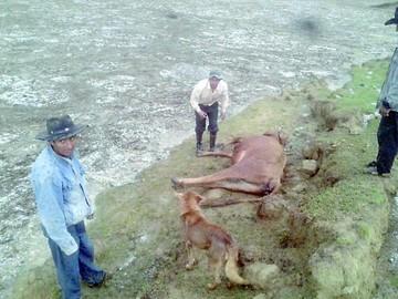 Clima: 78.5% de la producción agrícola está perdida