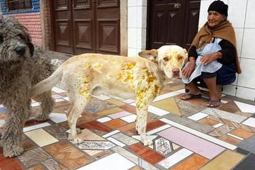 Activistas y grupos protectores marcharán esta tarde contra el maltrato animal