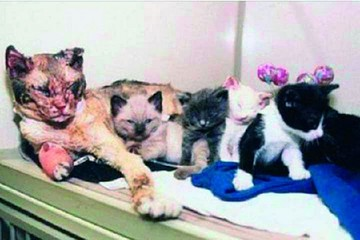Una gata mamá salva a sus cinco crías de un incendio