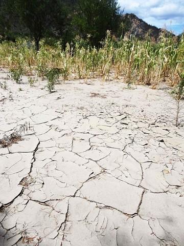 Alertan de impacto económico si no hay cosecha en Chuquisaca