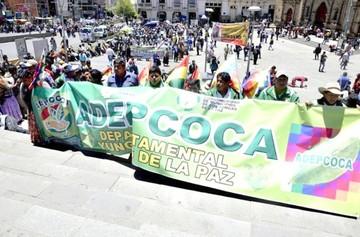 """Ley de la """"coca ancestral"""" aún no motiva respuesta"""