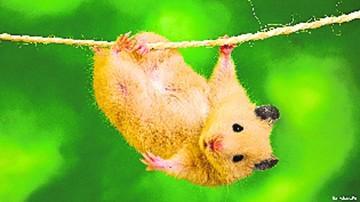 Los animales, ¿pueden suicidarse?