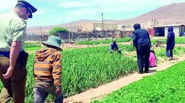 Chile: Rescatan a tres niños explotados en agricultura