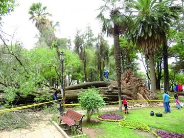 Lluvias provocan caída de  un árbol e inundaciones