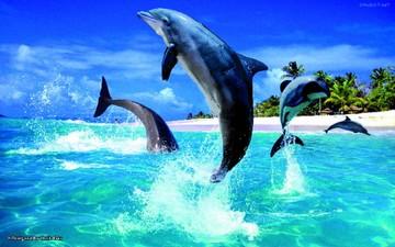 Delfines salvan a socorristas del ataque de un tiburón