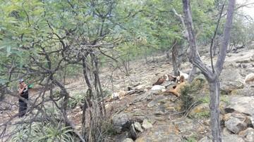 Un rayo mata a chivos y cabras en una comunidad del municipio de Mojocoya