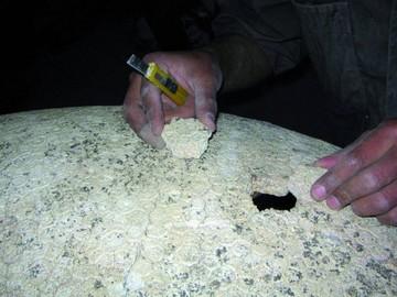Gliptodonte hallado en Yamparáez es una especie única en el mundo