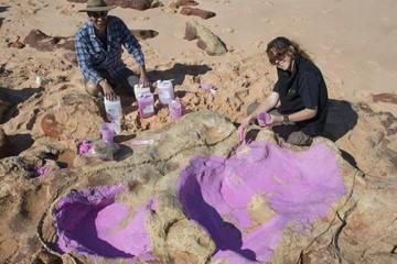 Identifican 150 huellas de 21 especies de dinosaurios en Australia