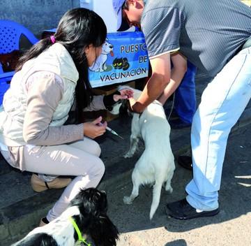 Activan plan para evitar la rabia canina