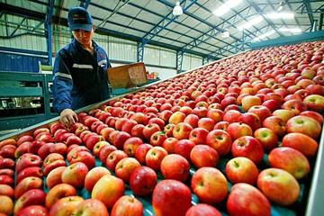 IBCE: Relaciones comerciales con Chile, en riesgo de deteriorarse