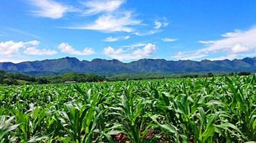 Desventajas restan competitividad a los agricultores del departamento
