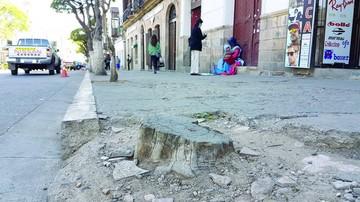 No reponen árboles secos y cortados en el centro