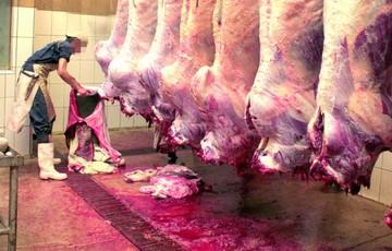 La Gobernación sancionará a mataderos
