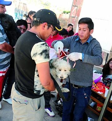 Aumentan mascotas vacunadas en cruzada