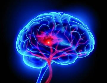 El cerebro y el estrés