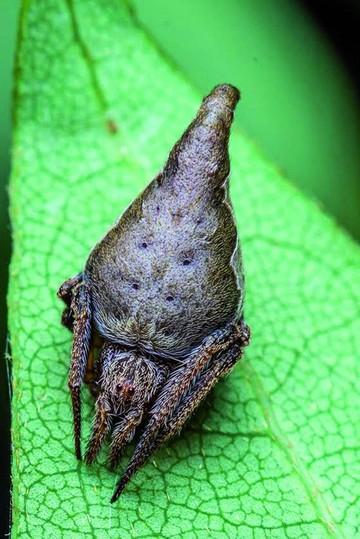 ¿Por qué nos llaman bichos raros?