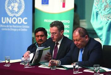 Informe: El cultivo de coca en Bolivia aumenta en 14%