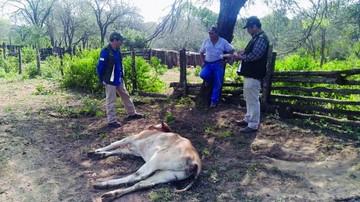 Se pierden 198 reses por babesiosis en Macheretí