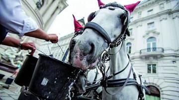Retiran coches de caballos por altas temperaturas