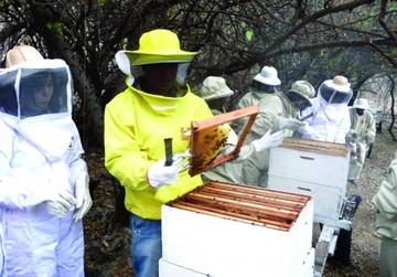 Documental de NatGeo difundirá miel boliviana