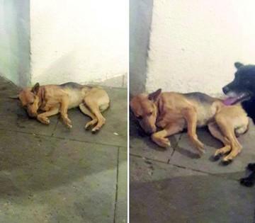 Suspenden reunión para informar traslado de canes