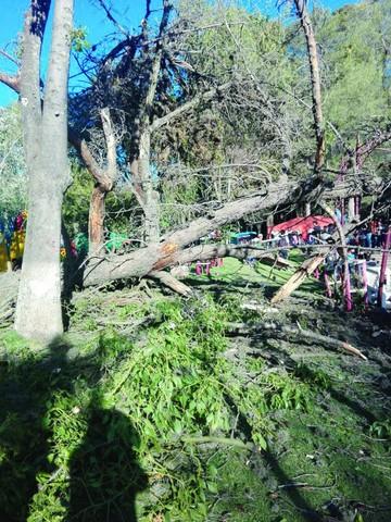 Un árbol centenario cae y causa susto en el parque