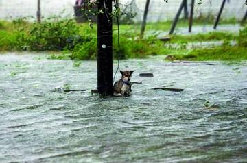 Abandonan a perros en las inundaciones de Houston