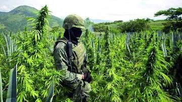 Droga incautada supera registro de últimos años