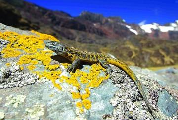 Parque Madidi le da al mundo 36 nuevas especies