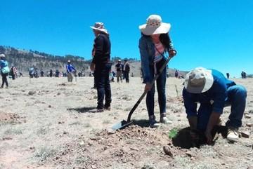 Cultivan 3.000 plantines en las cercanías del aeropuerto de Alcantarí