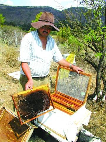 Tras el vuelo de las abejas
