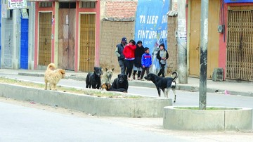 Alcaldía retoma captura de perros en las calles