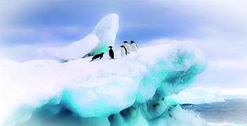 Investigadores advierten por muerte de pingüinos