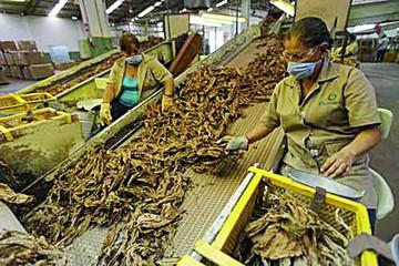 Casi 200 ONG piden a la OIT que rompa sus lazos con la industria tabacalera