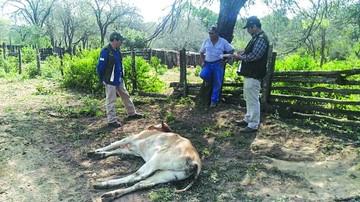 Vacunación de reses en Macharetí llegó al 90% de cobertura