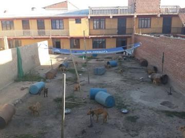 Denuncian criadero de perros pitbull para peleas ilegales
